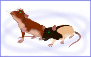 Vidole and Kigeni rats by Akril15