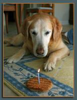A Dog's Day by georgiarose