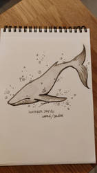 INKTOBER 2018 - Day12 - Whale by Namwhan-K