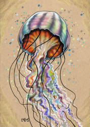 Jellyfish by bryancollins