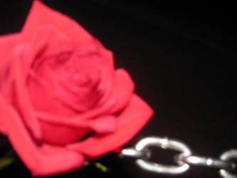 Chain linked Rose. 02 by candycorpsex3