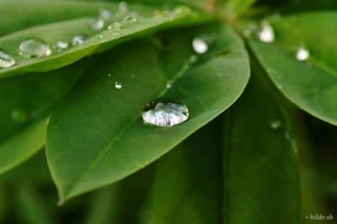 Raindrop by hilde-sb