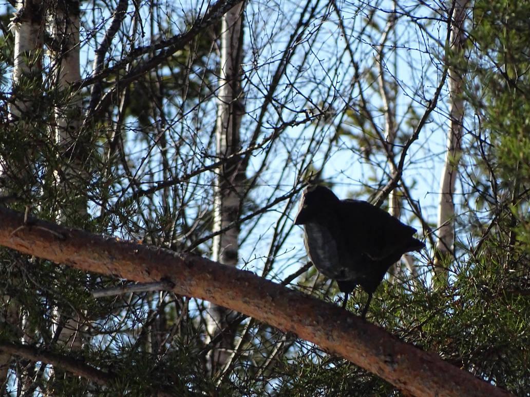 Raven by RaisedFists