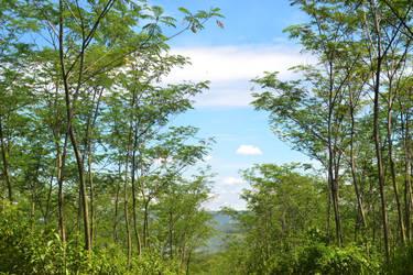 Rindai Pohon by imas1607