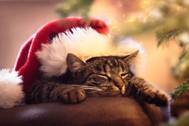 Relaxing Christmastime by IsabellaJainePhoto