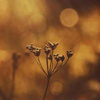 Autumn light by vanillapearl