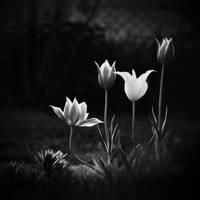 Hajnal by vanillapearl