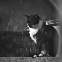 Cat in the rain by vanillapearl