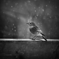 Little bird by vanillapearl