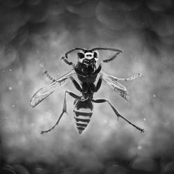 Wasp on the window by vanillapearl