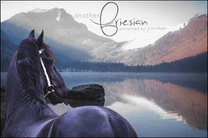 Anotherfriesian by camochick13