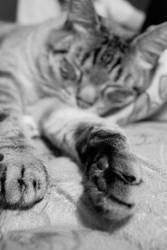 sleeping tiger by bubblegumwishes