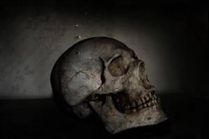 Skull by rainsongs