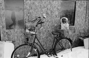cold day for a dog by iapostolovski