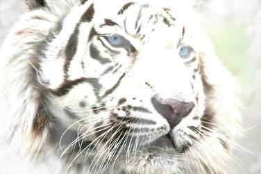 White Tiger by Sisyphus-Child