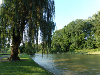 River Side Willow by FantasyFeathers