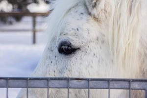 Eye of the horse by Persephonie1019