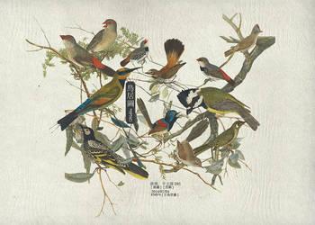 birds pngs by YENJUE