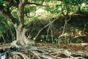 The Thinking Tree by sydney10