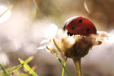 Ladybird by paulili14
