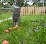 Cat with apples by Lubov2001