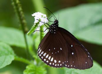 Butterfly by Mysty-Spirit