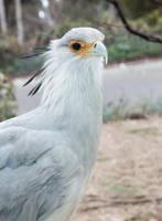 Secretary Bird by dkbarto