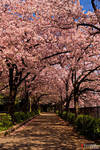 Sakuranomiya by Tim-Wilko