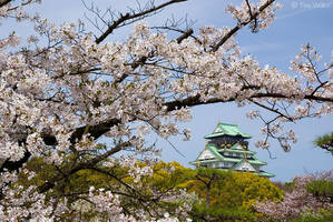 Cherry Blossom at Osaka Castle by Tim-Wilko