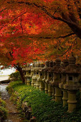 Katsuo-ji Lanterns by Tim-Wilko