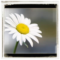 a simple flower by doverby