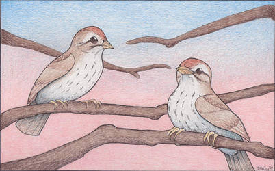 Sparrows by Amritha