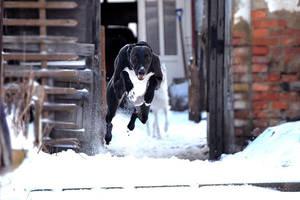 Snow by hanyasys