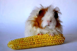 Piggy and sweetcorn by hanyasys