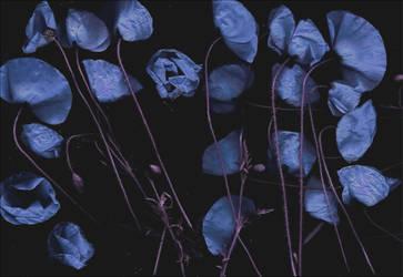 Midnight blue by AlexandrinaAna