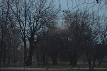 A murder of crows by AlexandrinaAna