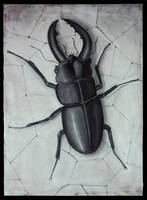 insect the black by elnurbabayev