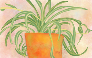 Day 5 - Spider Plant by bookwormy606