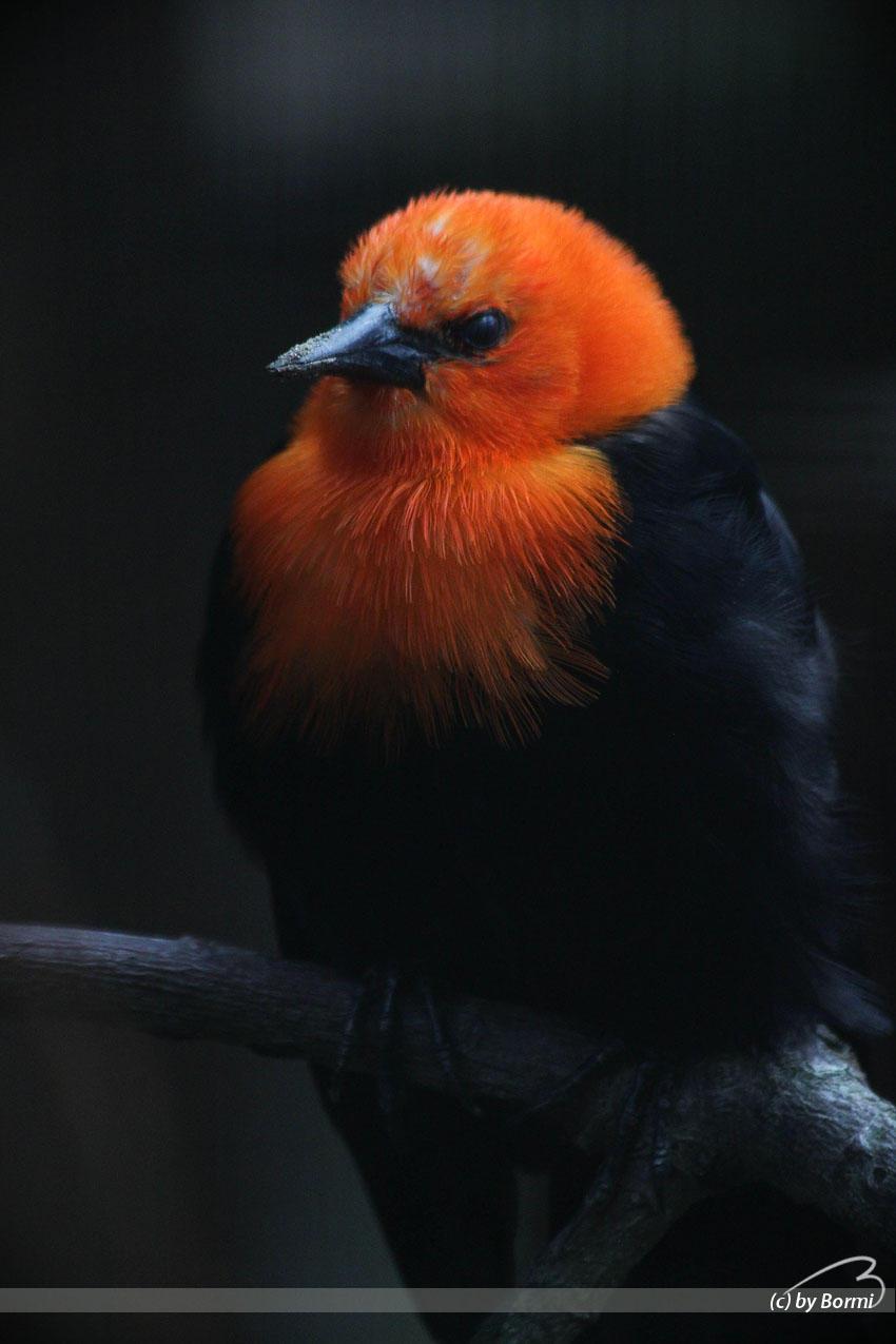 Tropical Bird 2 by Bormi
