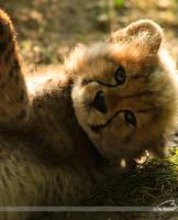 cheetah baby by Bormi