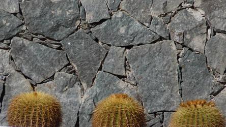 wall cactii by jonvin