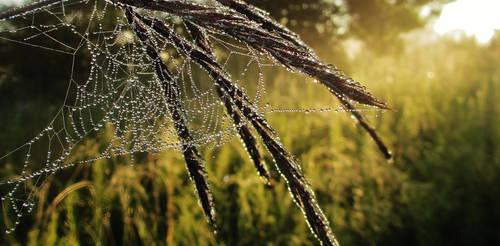 Veil by NicoleKeller