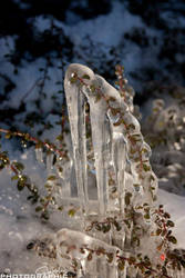 Icicle by cupplesey