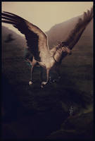 Guard My Heel by kaons