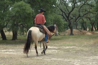 Cowboy 1 by kaons