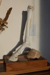 Articulated Horse Leg by Minotaur-Queen