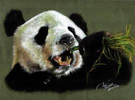 Panda Bear by adrigrcia