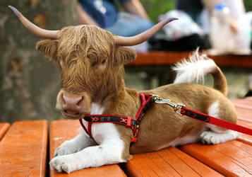 Bull Dog by MsgtBob