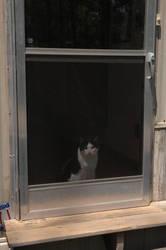 Malichi, the Inside Cat by pecaspers