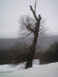 The Big Birch by pecaspers